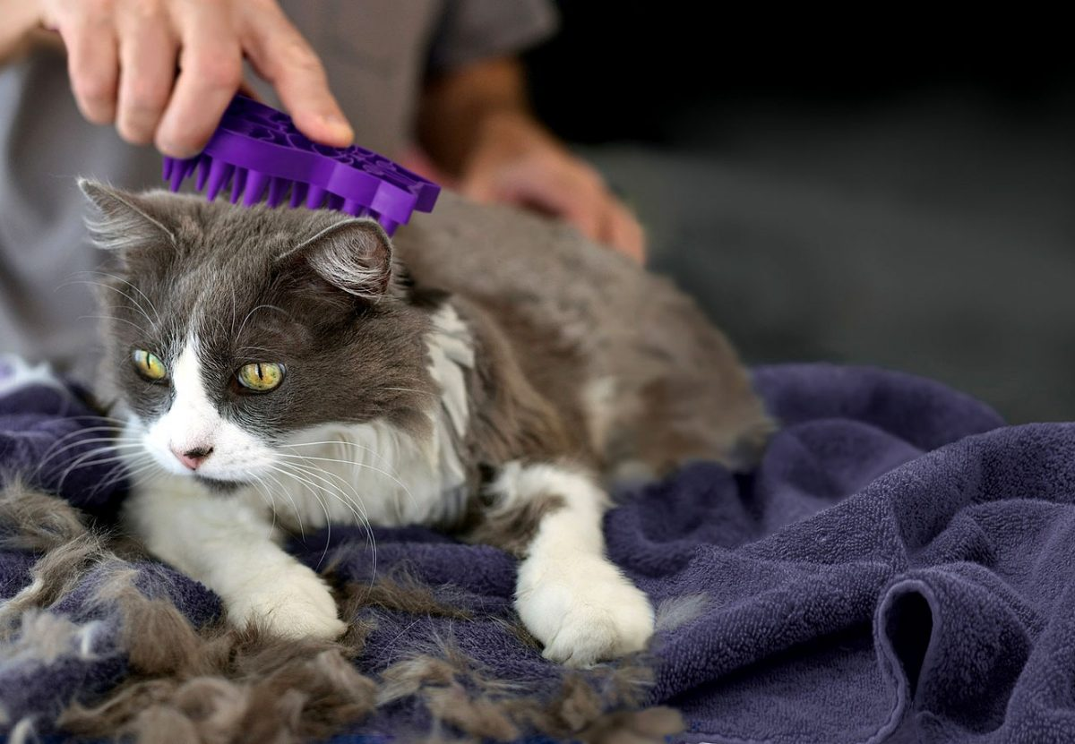 Why You Should Groom Your Cat: 6 Reasons