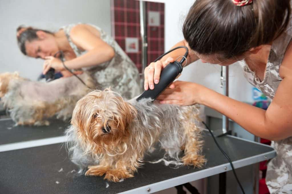 5 Indications of a Good Groomer