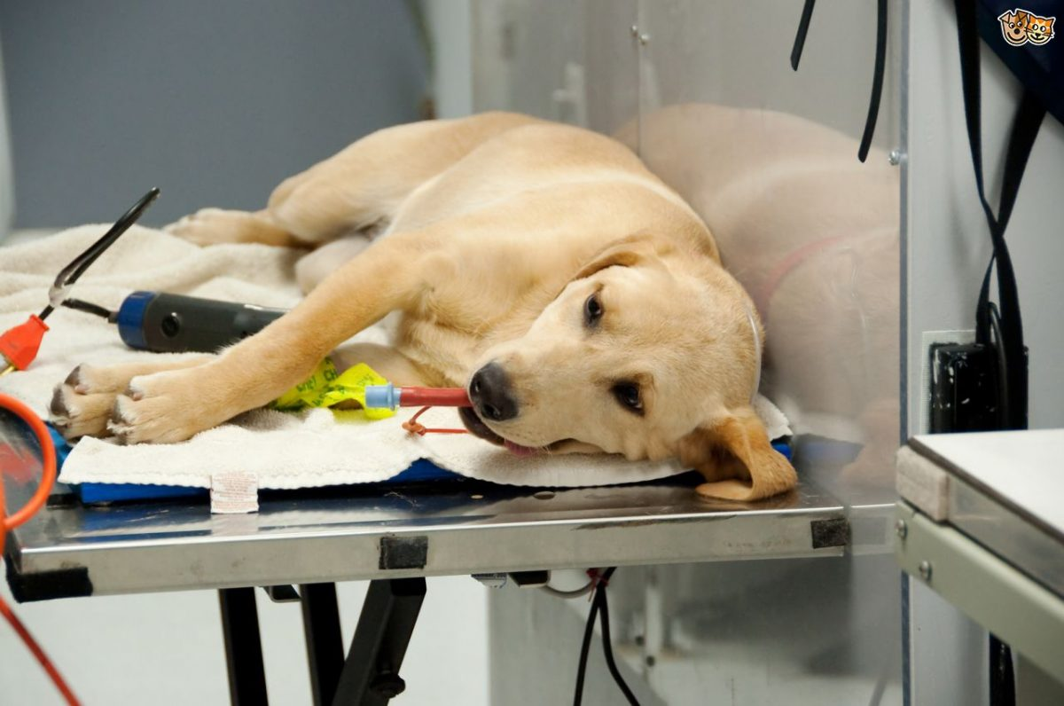 Pets and Anaesthetics