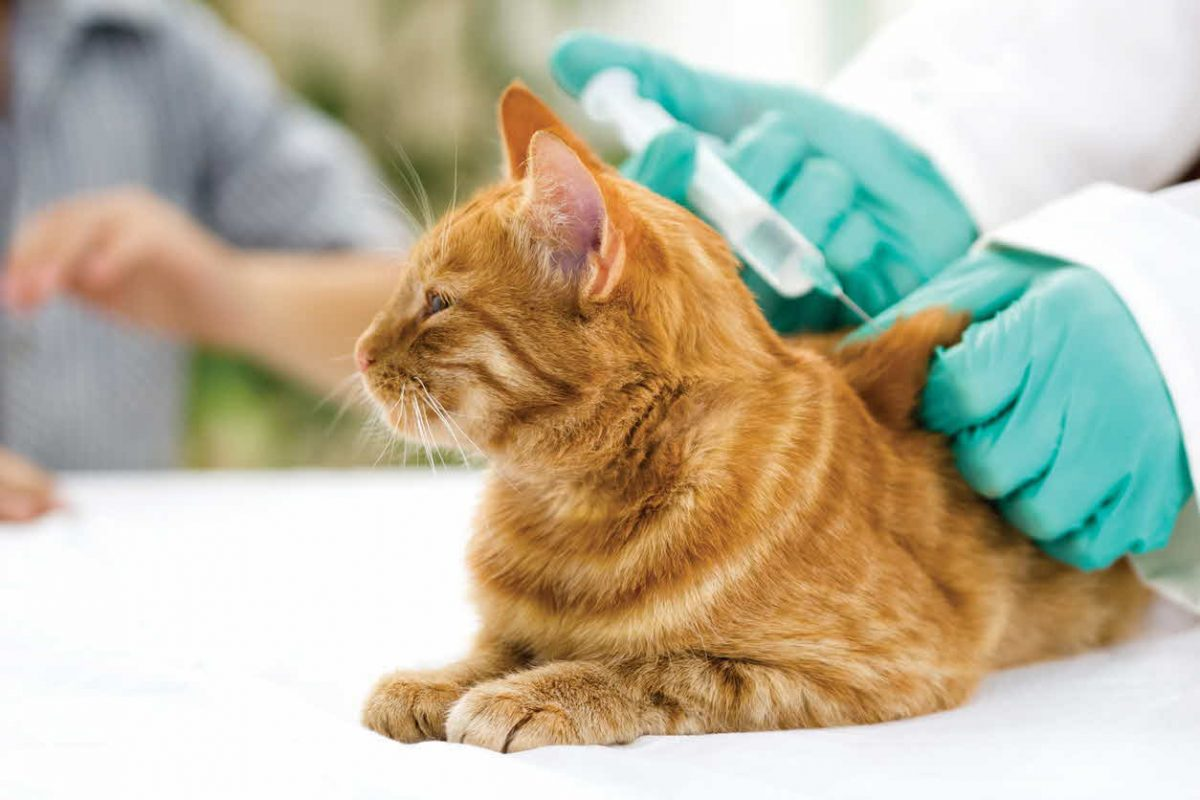 Do Vaccines Cause Harm to Pets?