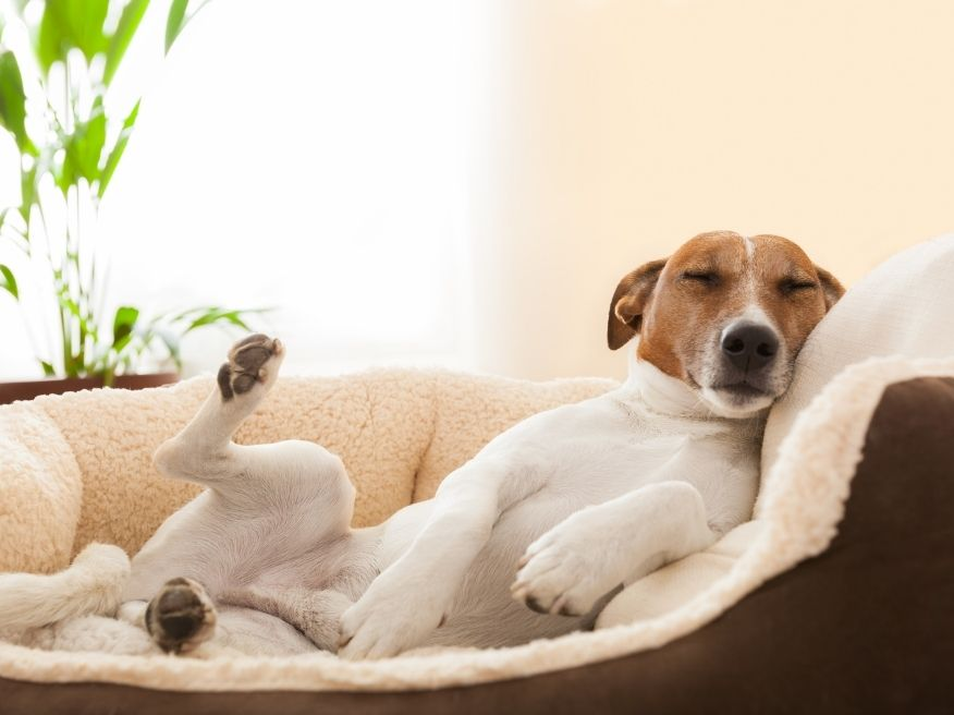 How to Cure Joint Pain in Dogs